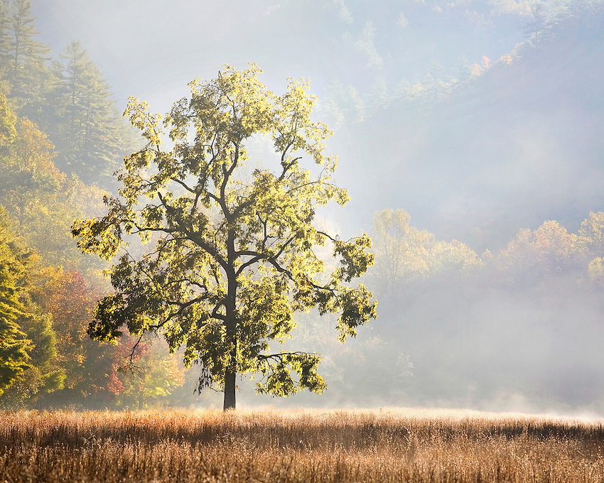 """""""TREE OF LIFE"""" -- A lone tree at dawn in the Cataloochee Valley region of Great Smoky Mountains National Park. Located on the border of North Carolina and Tennessee in the southern Appalachian mountains."""