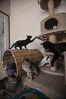 Quer&eacute;taro, Qro. 28 de mayo de 2015.- Con una tradici&oacute;n de al menos 15 a&ntilde;os, el refugio para animales de Rescate y Protecci&oacute;n A.C. anualmente recibe cerca de cuatro mil animales, muchos de &eacute;stos han sido abandonados por sus mismos due&ntilde;os en el lugar. En estos abandonos, animales han tenido que ser &quot;dormidos&quot; ya que no se pueden integrar nuevamente a una nueva din&aacute;mica de convivencia con las personas, debido al extra&ntilde;amiento de los anteriores due&ntilde;os. <br /> <br /> A decir de M&oacute;nica_ las redes sociales han servido para dar a conocer el trabajo de la asociaci&oacute;n y como enlace para quienes desean adoptar un animal, pueda hacerlos sin ning&uacute;n problema; pero tambi&eacute;n han tenido un doble filo. Sirven tambi&eacute;n para dar la direcci&oacute;n y que los due&ntilde;os de animales vayan a abandonar a las mascotas. De acuerdo a __ los abandonos han crecido exponencialmente en los &uacute;ltimos a&ntilde;os. <br /> <br /> En ocasiones al refugio han dejado animales amarrados en la puerta, en cajas, botes, o aventados a trav&eacute;s de la reja. <br /> <br /> Al d&iacute;a de hoy, existen cerca de 42 animales entre perros y gatos de diferentes razas, desde de animales con pedigree hasta raza criolla. La sobrepoblaci&oacute;n ha generado que los gastos del refugio lleguen a los 40 mil pesos mensuales, cantidad que ya es insostenible para la Asociaci&oacute;n. Este dinero se invierte entre sueldos, comidas, accesorios y mantenimiento del lugar. <br /> <br /> Ante &eacute;sta crisis econ&oacute;mica y con el riesgo de cerrar, ya que tampoco las donaciones de la iniciativa privada, las empresas de alimentos para animales, ni las dependencias gubernamentales han brindado apoyos constantes. Por el contrario las donaciones son espor&aacute;dicas. Las consultas y atenciones m&eacute;dicas a externos,  as&iacute; como las din&aacute;micas de educaci&oacute;n en las escuelas, pensiones, eutan
