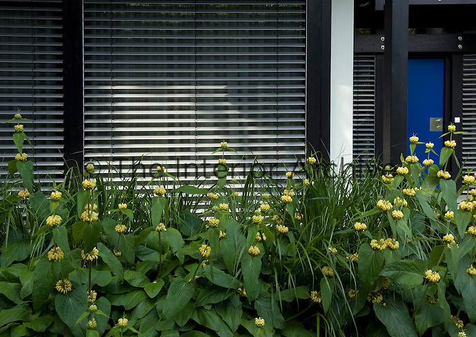 The pre-fabricated house from Germany is built to an uncompromising modernist design which is softened by carefully placed flowerbeds and the creative use of architectural plants