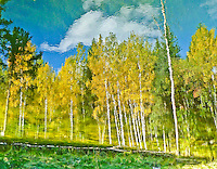 &quot;THE ILLUSION OF FALL&quot;<br /> <br /> White clouds drifting in blues skies. Bright colored aspen dressed in golden fall finery. A beautiful landscape to be sure. But, is it real or just an illusion? ORIGINAL 24 X 36 GALLERY WRAPPED CANVAS SIGNED BY THE ARTIST $2,500. CONTACT FOR AVAILABILITY.