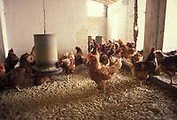 Calvatone, Cremona, IRIS Bio - cooperativa per l'agricoltura biologica e l'allevamento di animali con metodi naturali. <br /> Calvatone, Cremona, IRIS Bio - cooperative for organic farming and the breeding of animals with natural methods.