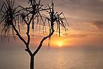 Pandanus palm with sun rising over Coral Sea.  Port Douglas, Queensland, Australia