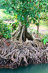 Tha Pom Swamp Forest Thailand