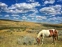 (i)Bighorn Paint - Montana* Big Horn Battlefield - Custer's Last Stand<br /> <br /> *this image was shot with an iPhone6 and should not be printed larger than 16x24 for best results.