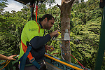 Doing his Post Doctorate at JCU is Dr. Alex Cheesman doing scientific research linking changes in phloem flux to environmental variables in two tropical forest canopy tree species at the Daintree Rainforest Observatory.