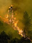 Briceburg, California - July 27, 2008  Wildfires Threaten Yosemite National Park .Fire flies up a Merced River Canyon wall this afternoon, July 27, 2008.  The Telegraph Fire has moved to the North Side of the Merced River.  Briceburg is just over 10 miles from the Yosemite National Park entrance..(This images was released editorial through Getty Images..Photo by Al Golub/Getty Images
