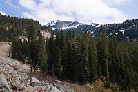 Forest near Cayuse Pass - Mt. Rainier National Park, WA