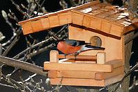 Gimpel, Dompfaff, Männchen, an der Vogelfütterung, Winterfütterung, Pyrrhula pyrrhula, Eurasian bullfinch, Bouvreuil pivoine