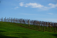 Wine grapevines in winter.<br />