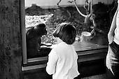 Wroclaw, Poland, April 4, 2009:<br /> Young visitor Karolina Golaszewska looking at the gibbon, at the Wroclaw Zoo.(Photo by Piotr Malecki / Napo Images)..Mloda odwiedzajaca Karolina Golaszewska i gibon w Zoo..Wroclaw, Kwiecien 2009.Fot: Piotr Malecki / Napo Images