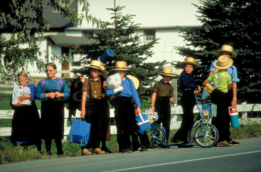 Amish school children carrying bookbags and lunch pails and with one bicycle wait for traffic along busy Rt 340 after school. Amish schoolchildren. Lancaster Pennsylvania United States Route 340.