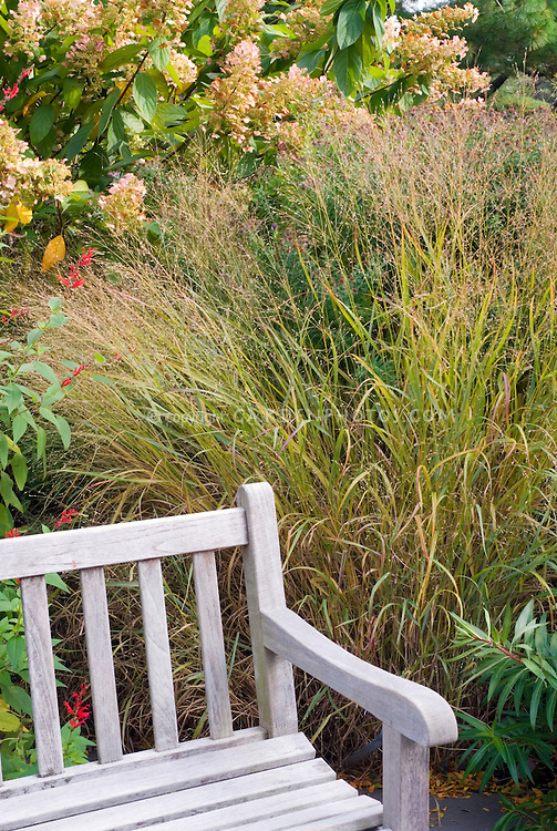 Wooden garden bench against ornamental grasses and shrubs in bloom 27242