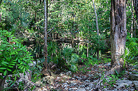 Tropical Vegetation, Chikin Ha Cenote, Playa del Carmen, Riviera Maya, Yucatan, Mexico.