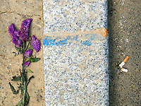France. Department Ile-de-France. Paris. Purple flowers and discarded cigarette butt on the sidewalk. 10.07.2011 © 2011 Didier Ruef *** Local Caption *** .