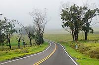 Winding, misty Saddle Road on the Big Island.