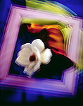 A flower is photographed on a multicolored background and within a picture frame