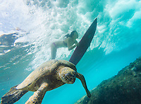 A resident green sea turtle glides through the water as a surfer girl duck dives a wave at Rocky Point, O'ahu.