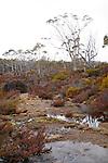 Wombat Moor, Mt Field National Park, Tasmania