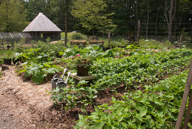 Backyard Farm Garden