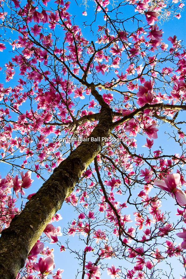 Signs of spring blair ball photography for Garden trees memphis