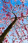 Tulip Tree Memphis Botanical Garden