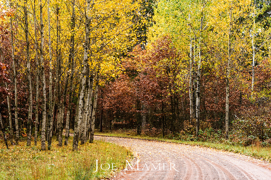 A gravel road winds through the colorful autumn forest of St. Croix State Park near Hinkley, Minnesota.