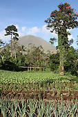 Agriculture near Kinilow town at foot of Lokon-Empung volcano, Sulawesi, Indonesia.