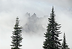Rock spires enshrouded in misty clouds, with evergreen trees in the foreground. Below Little Tahoma in Mount Rainier National Park, Washington State.....Photographed on digital media.