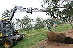 Foto: VidiPhoto<br /> <br /> SINT-OEDENRODE - Medewerkers van Van den Berk Boomkwekerijen uit Sint-Oedenrode (NB) maken donderdag een bijzondere blauwe den klaar voor transport. De Pinus parviflora &lsquo;Glauca&rsquo; is 40 jaar oud, heeft een kluit van 2 meter cm doorsnede, is zo&rsquo;n 6 meter hoog en weegt ruim 2 ton. De dennenboom is niet bestemd voor een kerstviering maar voor het evenement Future Green City in Den Bosch. Daar wordt de den gepresenteerd als een natuurlijke oplossing voor het fijnstofprobleem in steden. De naaldbomen zoals de Pinus zijn namelijk de beste afvangers van fijnstof. Het event Future Green City vindt voor het eerst plaats van 24-26 november in het kader van het Jaar van de Ruimte. In de Brabanthallen &rsquo;s-Hertogenbosch presenteren bedrijven hun producten en diensten om steden groen, klimaatbestendig, energiezuinig en afvalneutraal in te richten. Van den Berk Boomkwekerijen levert naaldbomen aan steden in 35 landen in Europa.