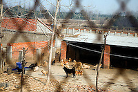 Dogs stand in an open field at Ha Wenjin's no-kill dog and cat rescue farm outside Nanjing, Jiangsu, China.