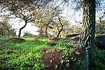 Mediterranean Woodland Landscape, Sierra Morena, Andalucia, Spain