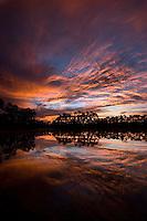 Daybreak at Long Pine Key, Everglades National Park, FL