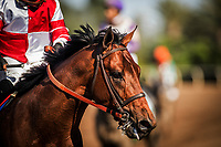 ARCADIA, CA -APRIL 08: Battle of Midway at the Santa Anita Derby at Santa Anita Park on April 08, 2017 in Arcadia, California. (Photo by Alex Evers/Eclipse Sportswire/Getty Images)