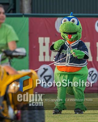 21 July 2016: Vermont Lake Monsters Mascot Champ entertains the fans as he is pulled on roller blades prior to a game against the Hudson Valley Renegades at Centennial Field in Burlington, Vermont. The Lake Monsters edged out the Renegades 4-3 in NY Penn League play. Mandatory Credit: Ed Wolfstein Photo *** RAW (NEF) Image File Available ***