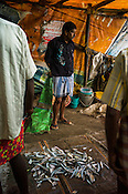 Local fisherman sell fish on the banks of the backwaters in Fort Kochi, Kerala, India.