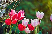 Descanso Gardens, La Canada Flintridge, CA, Garden blooms, flora, botanic,  garden, horticulture