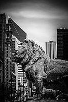 Black and white photo of Chicago lion statues at the Art Institute of Chicago. The bronze lions are a popular Chicago attraction and one of Chicago's most recognizable symbols.