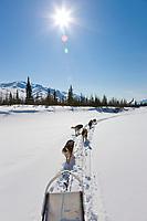 Recreational dog mushing, Brooks range, Arctic, Alaska.