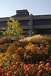 Bright flowers outside City Hall, Medford, Oregon