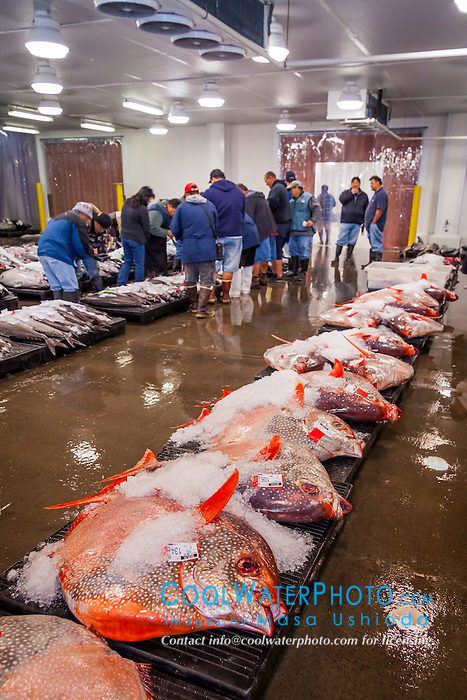 Opah or moonfish at honolulu fish auction masa ushioda for United fishing agency