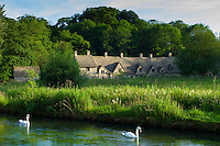 Swans on River Coln by Arlington Row cottages traditional almshouses in Bibury, Gloucestershire, The Cotswolds, UK