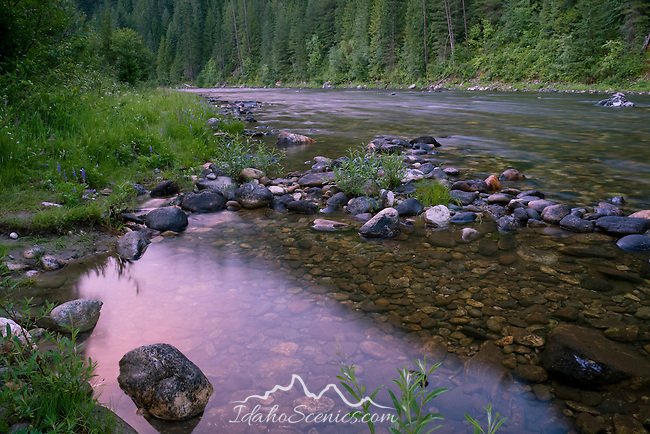 Idaho, North Central, Pierce, Clearwater National Forest, The last light of a summer day reflects in a stream side pool on Kelly Creek.