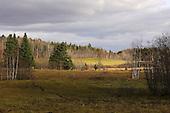 Landscape of fall farmland