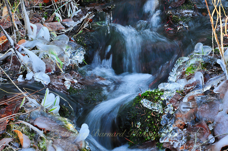 &quot;DANCING DEER CREEK&quot;<br />