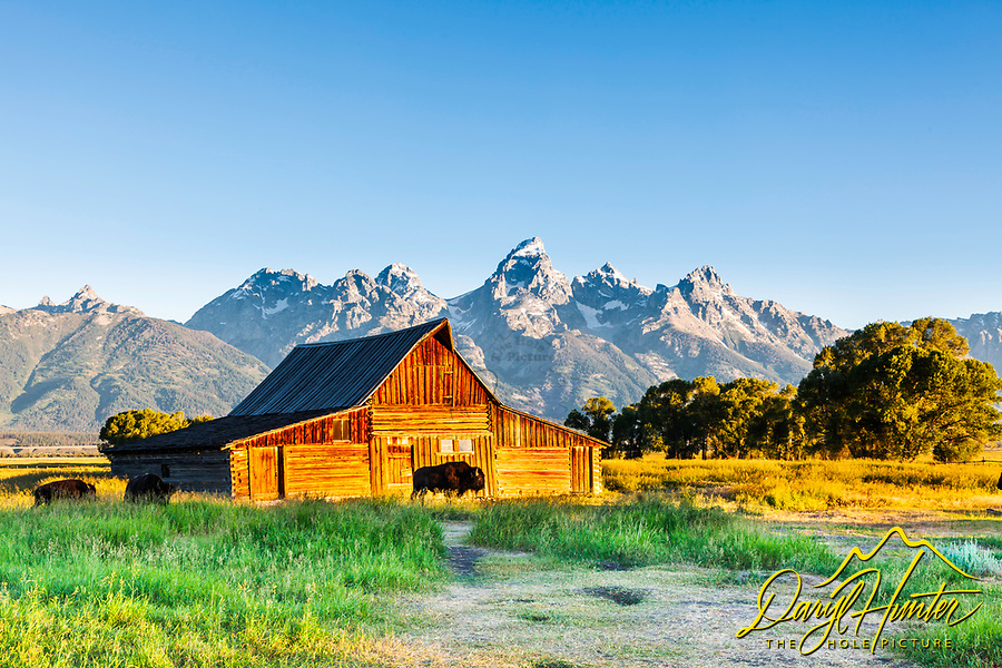 Moulton Barn and Bison, Jackson Hole, Wyoming