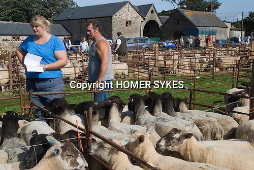 Farmers wife and farmer inspect sheep pens prior to the start of the annual auction. Priddy Sheep Fair Somerset Uk 2009.