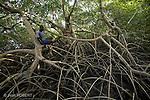 mangrova of orangozinho island..balade dans les bolongs de lile d'orangozinho.La mangrove est une foret aquatique recouverte à chaque maree, elle abrite une vie particulierement riche..