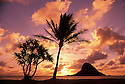 "Mokoli'i Island (""Chinaman's Hat""), Coconut Palm and Lauhala tree at sunrise; Windward Oahu, Hawaii."