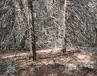 Sanctuary Trees