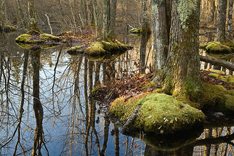 Swamp area in Acadia National Park, Maine